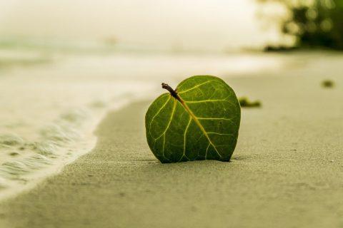 Vakantiestress, heimwee en andere spelbedervers