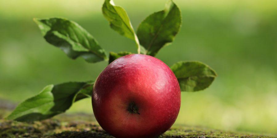 Jubileumlijstje! 1 jaar Miss Deadline: de groei- en bloeimomenten