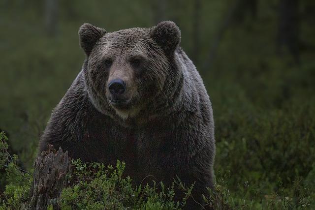Grizzlybeer headerfoto - Een angststoornis (ocd) in tijden van corona