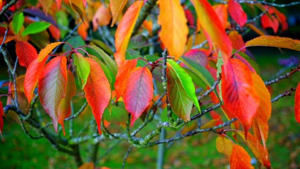 Afbeelding van bladeren in felle herstkleuren - decoratieve afbeelding bij 'Aanstormende herfst'